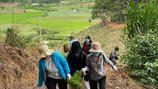 Cùng Đại Việt Group chung tay gieo mầm, tô xanh cao nguyên Đà Lạt